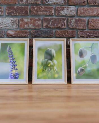framed_pictures