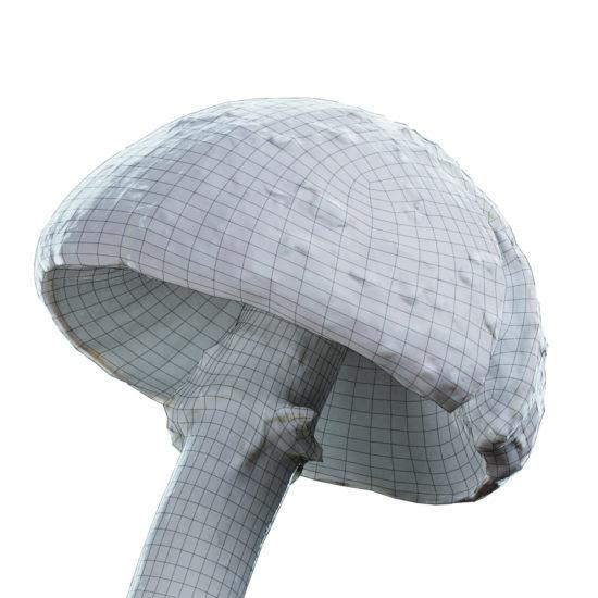 amanitus_mushroom_01_14