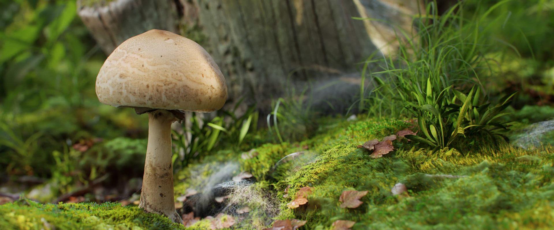 mushroom_03_04