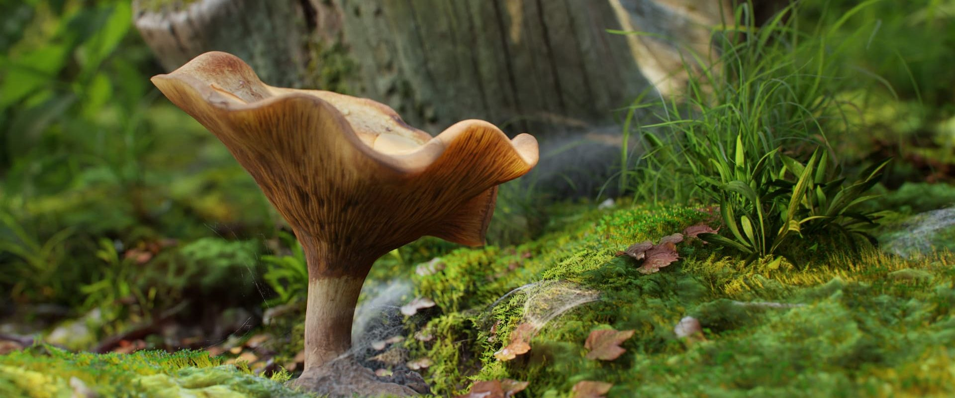 mushroom_14_03