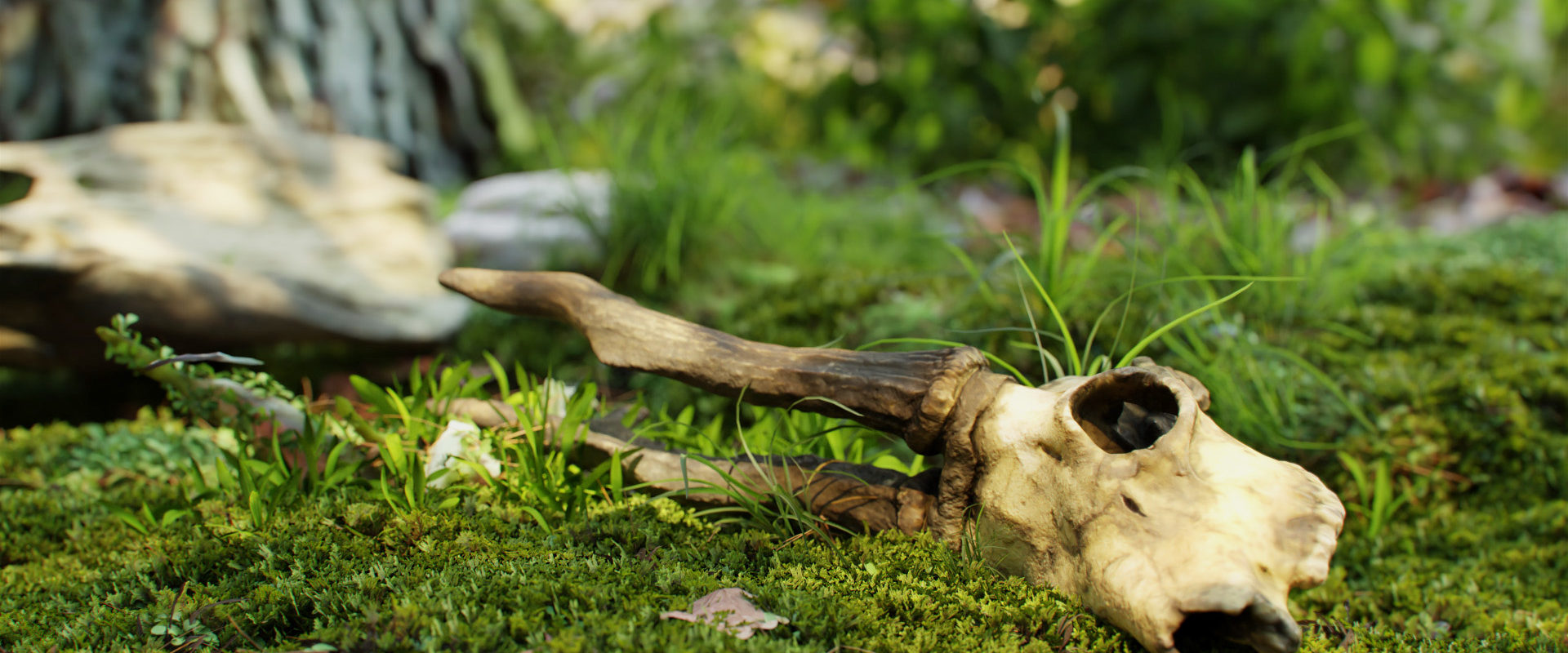 Goat_skull_with_antlers_9_13_