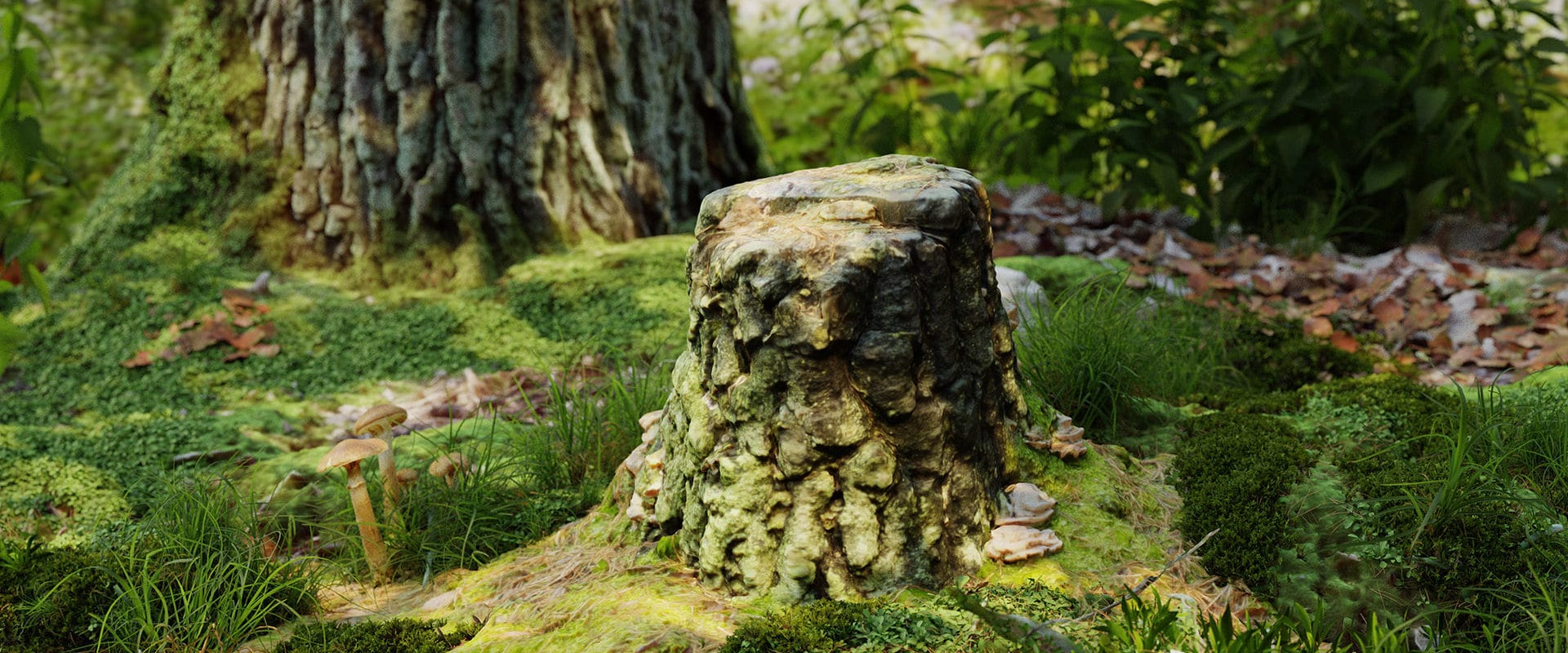 Tree_stump_6_13q